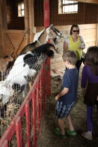 Feeding the goats, Open Farm Day 2013