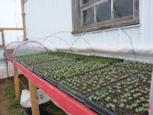 Early spring seedlings