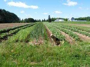 Field #4 in summer