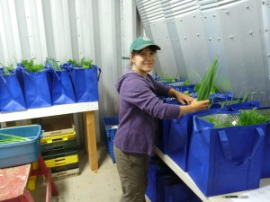 Filling CSA bags in summer